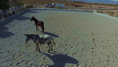 Acclimating the horses and burros  2B