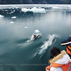 Spotting Peale's Dolphin in the fjords
