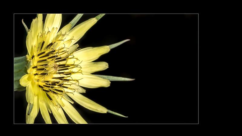 Wild flower | Fleur sauvage