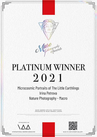MUSE Photography Winner Certificate