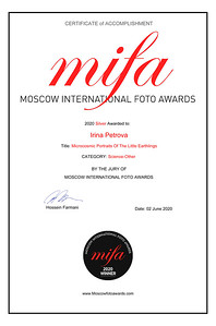MIFA Winner Cert