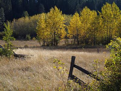 Fall Field