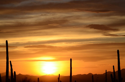 Saguaro Sunset 2