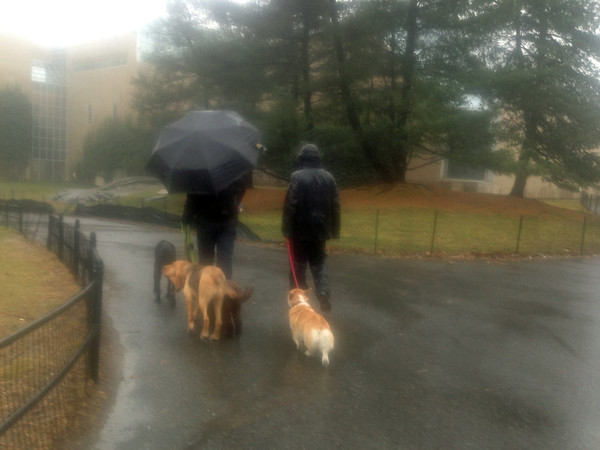 Rainy Day Dog Walkers