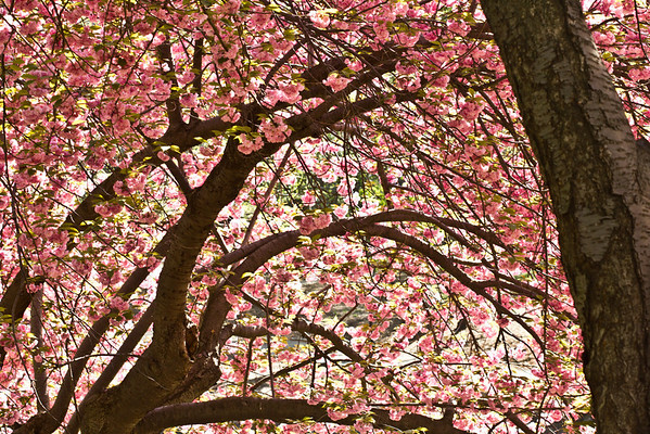 Spring Canopy