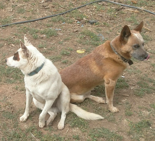 Name: Jake & Bandit