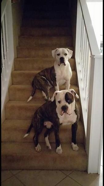 Name: Timber & Roscoe