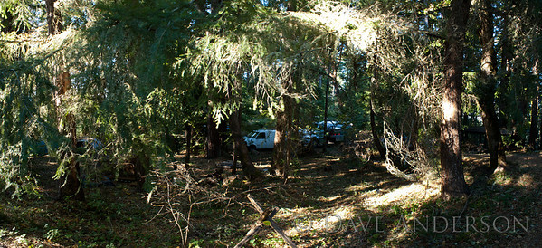 Stitched-together panorama showing part of the mixed grove just off the main knoll. The house is behind the camera. This was on the day that the septic was being inspected, which explains the pumper truck. :)