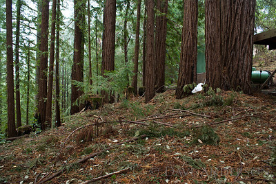 Another shot of the beautiful redwood grove just NW of the house. House is beyond the carport and generator(green shed).