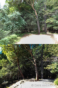 Area around house before & after tree/brush clearing.