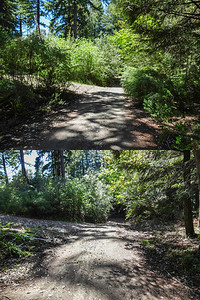 Looking down driveway past fork to neighbor's house, before & after Scotch Broom removal. Scotch Broom is an invasive species that crowds out all other plants, is not palatable to indigenous wildlife, and is a fire hazard.