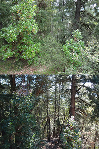 Area around house before & after tree/brush clearing. We haven't done much on this side yet...