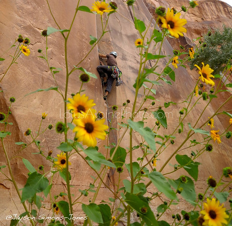 Climbing in the Sunflowers....Moab, UT