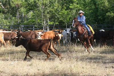 G2 cattle drive 2008 (10)