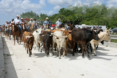 G2 cattle drive 2008 (16)