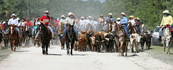 G2 cattle drive 2008 (14)
