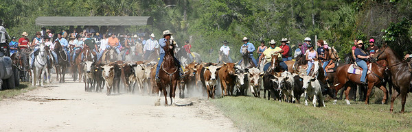 G2 cattle drive 2008 (21)