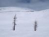 Front Side<br /> Lake Louise Ski Area<br /> Banff National Park<br /> Alberta, Canada