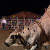 Dalton Rodeo-93