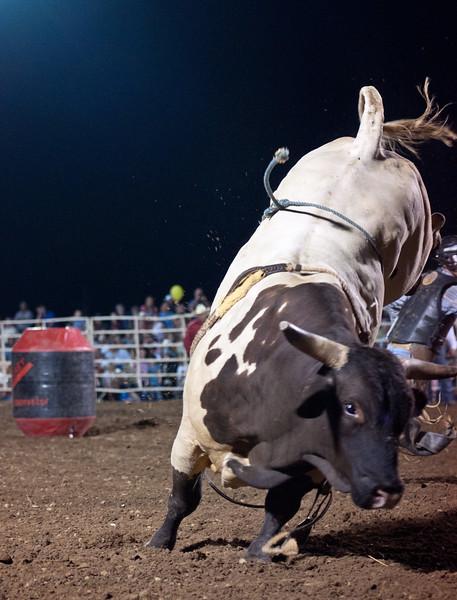 Dalton Rodeo-114