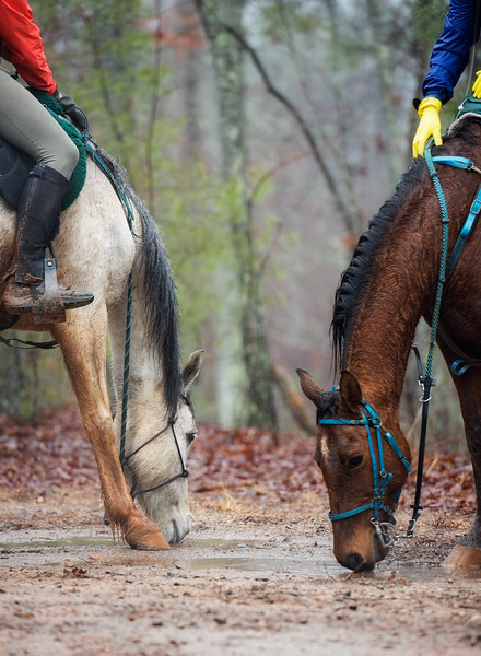 2018-Hot-to-Trot-85