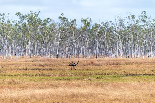 Exercise Talisman Saber 2019.  Australias deadliest combatant stalks the battlefield.