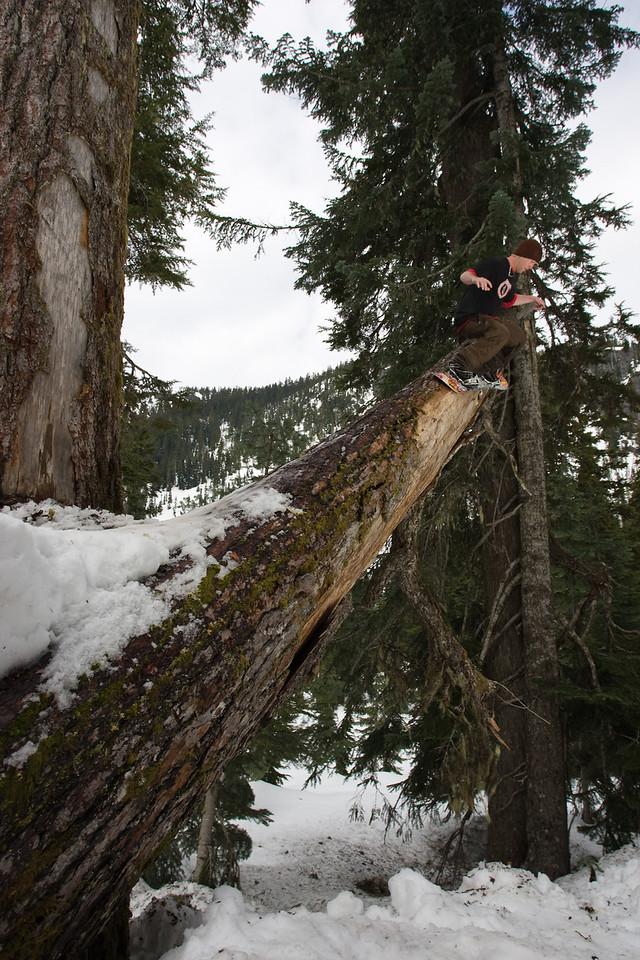 Alpental_Tree_Jib_20080505