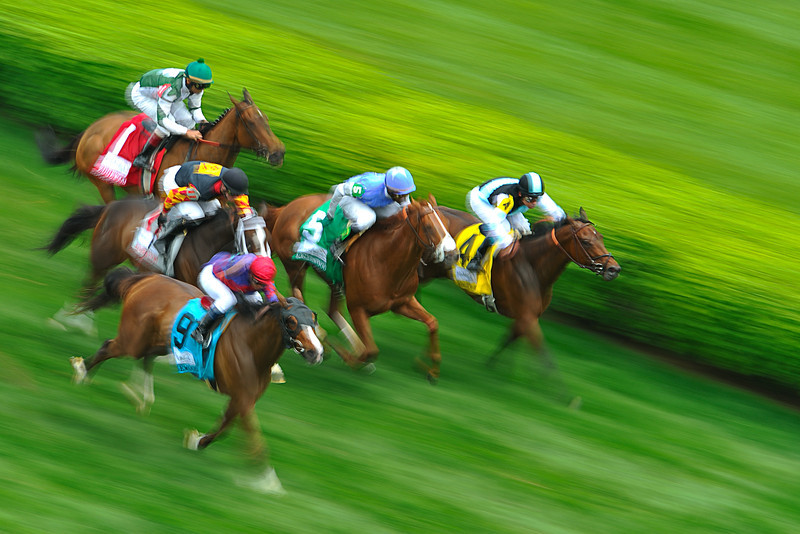 Panned Horses During Turf Race at Churchill Downs, Louisville, Kentucky