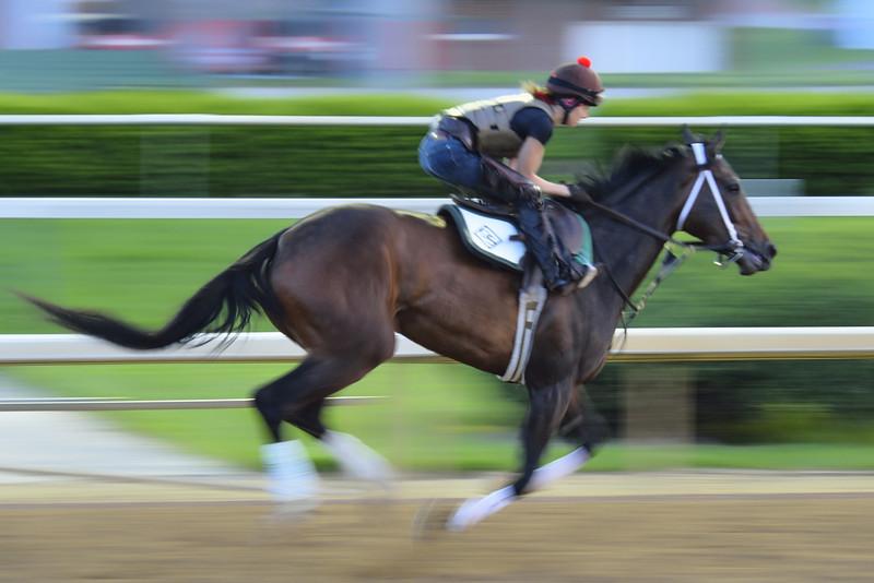 Horse Running at Churchill Downs, Kentucky