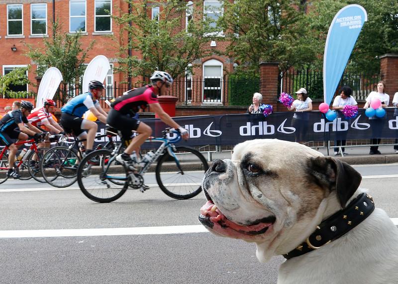 Bulldog bike fan