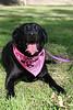 Poppy looking pretty in pink!