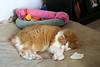 But if sleeping here reinforces my Alpha-feline status, so be it.