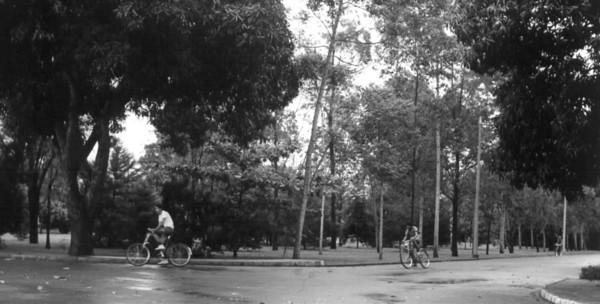Corrida no parque