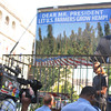 """David Bronner of Dr. Bronner's Magic Soaps harvests industrial hemp in front of the White House.  Large signs around him say """" Dear Mr. President, Let US Farmers Grow Hemp"""" .  The action comes directly after National Hemp History Week"""