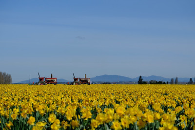 Two tractors waiting in the fields