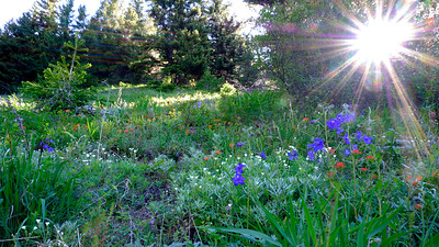 Wildflowers and starburst