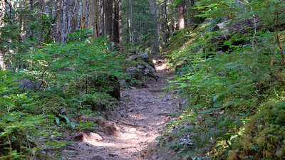 The trail leads up steeply from the trailhead