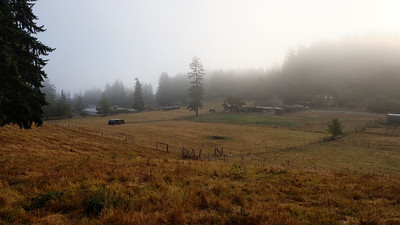 Heyday in the morning mist