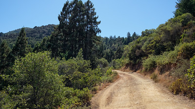 Fire road on Mt Tam