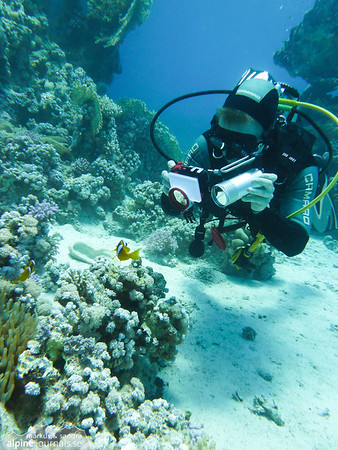 Me photographing a Red Sea clownfish