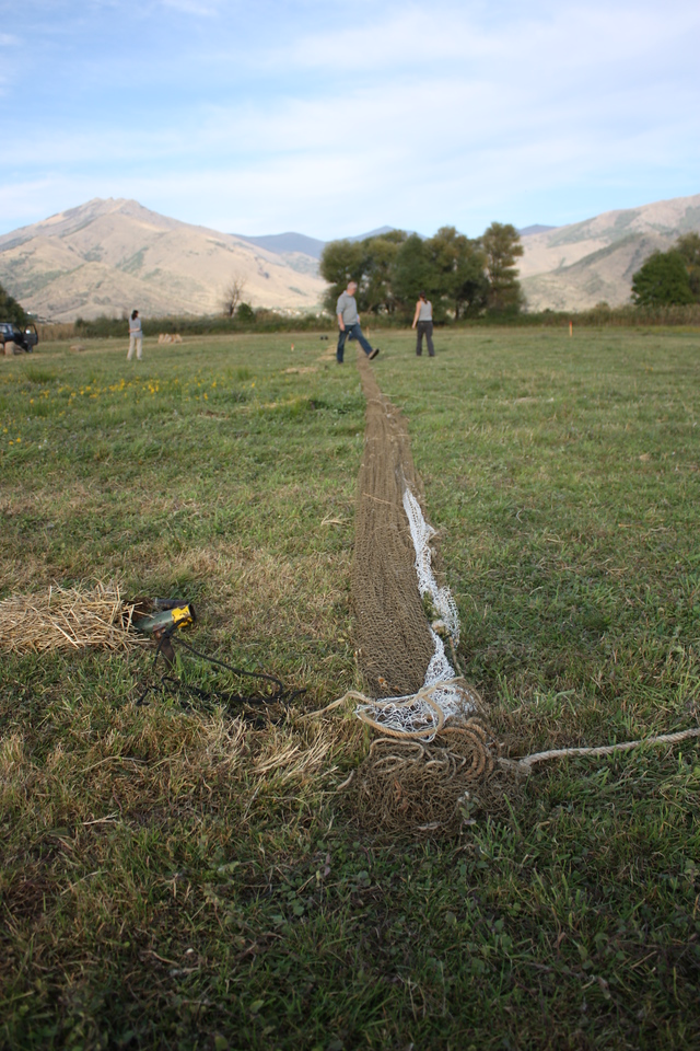 Preparation of nets for greylag geese