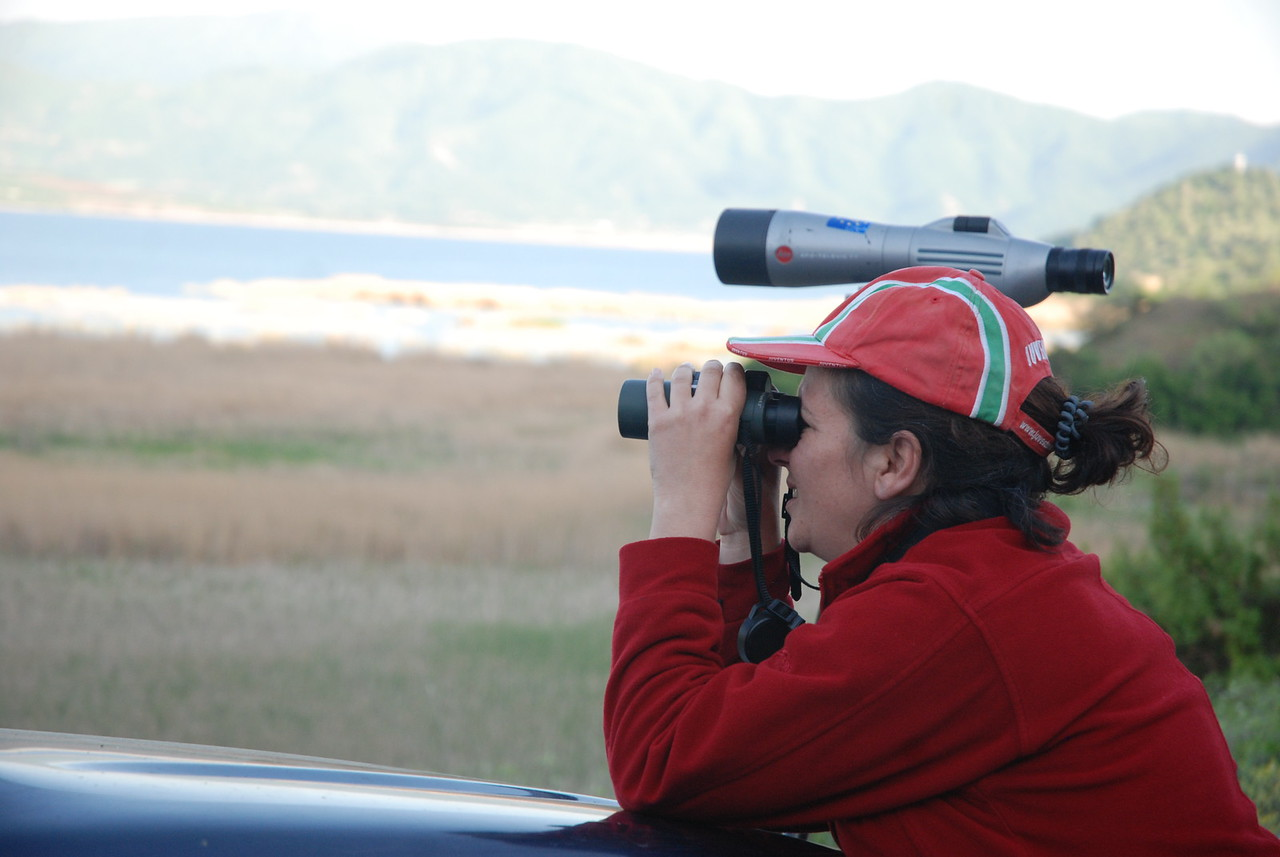 Monitoring: Bird counting
