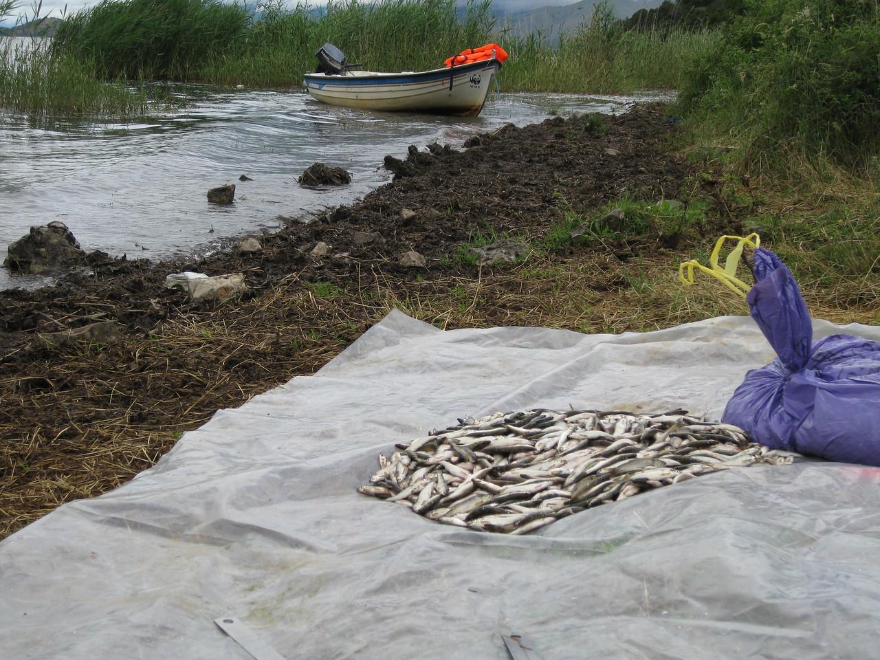 Experimental Fishing 2010