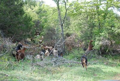 grazing junex