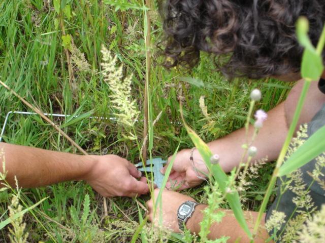 Vegetation Measurments 2005