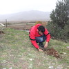 Planting junipers Junex 2016