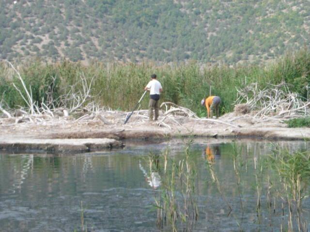 Field Work on Colonies 2005
