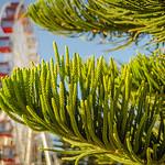 Nature_Green Leaves_Paul McKeown