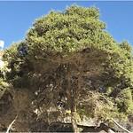 Nature_Tree_Bruce Finkelstein