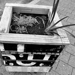 Nature_garden box_david white_